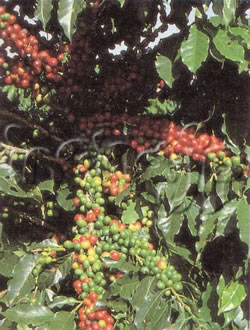 coffee20071025-12-1-1