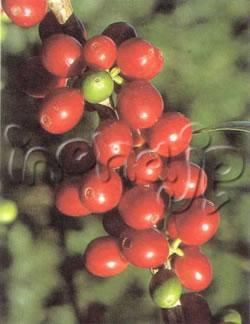 coffee20071025-12-6-1